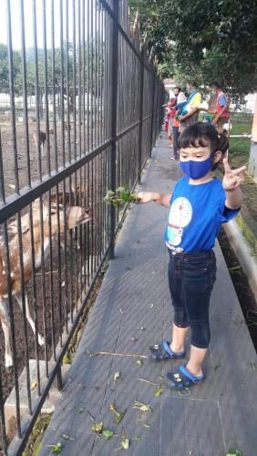 Salah satu anak-anak pengunjung wisata Gedung Negara Cirebon, sedang asik memberikan makanan ke rusa-rusa yang sengaja di pelihara. (FOTO: Tia)